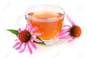 health benefits of Echinacea Tea