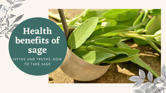 Health benefits of sage myths and truth