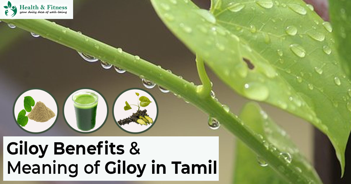 Giloy Meaning in Tamil